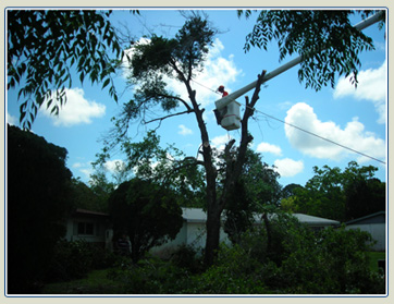 Space Coast Tree Works Contact Us